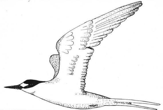 Drawing by Elizabeth Anne Schreiber
